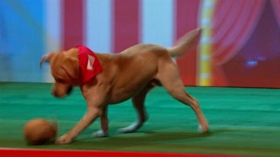 Sport Relief's Top Dog